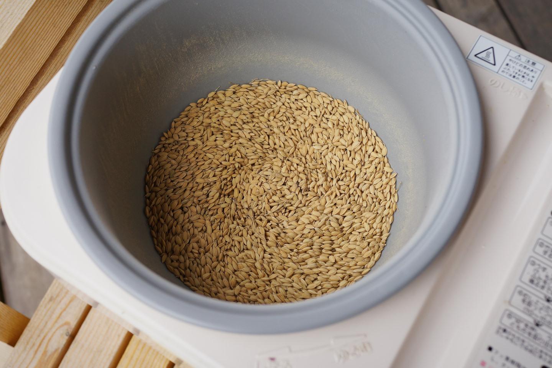 種籾脱芒_DSC04252.jpg