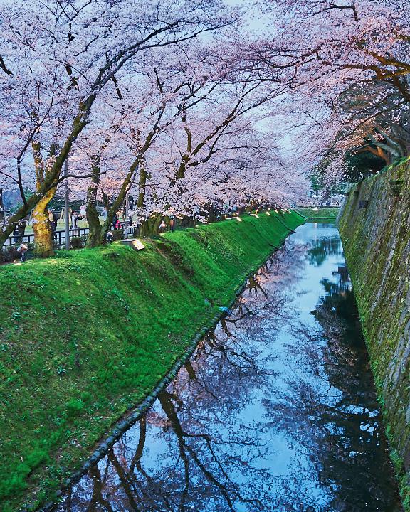 金沢桜DSC01096.jpg