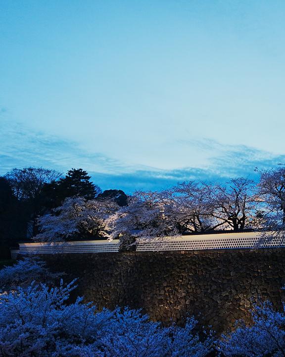 金沢桜DSC01109.jpg